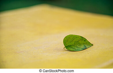 A green leaf on the yellow seat2