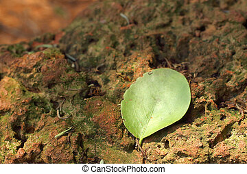 A green leaves on brown stones.