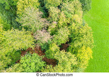 a green meadow and mixed forest from above