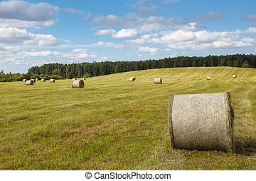 meadow with rolled up wheat