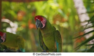 a green parrot sits on a branch