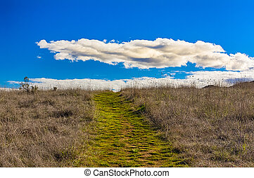 A Green Path Leading to Horizon with White Puffy Clouds