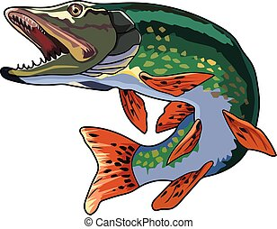 pike - A green pike with a pointed snout and large teeth.