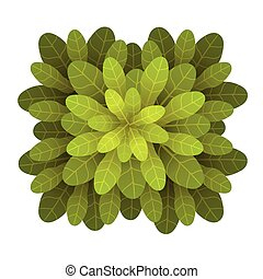 A green plant or tree, top view. Vector illustration, isolated on white.
