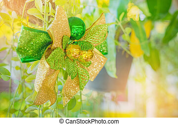 A green ribbon with small ball for decorate on Dischidia...