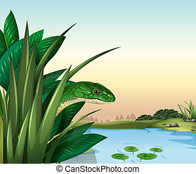 A green snake at the pond
