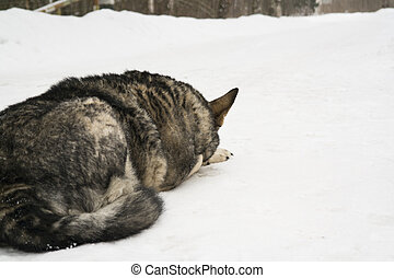 dog lying down on the snow
