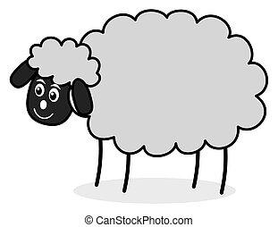 a grey sheep