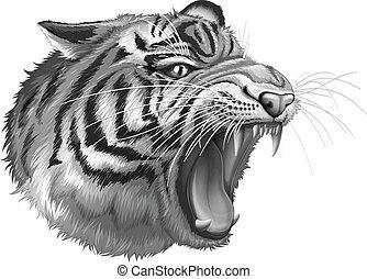 A grey tiger roaring