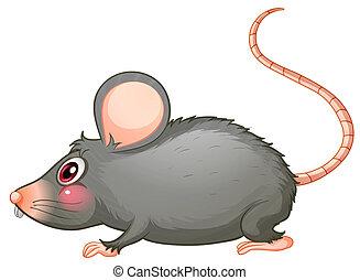 a, gris, rat