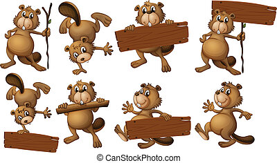 A group of beavers with empty wooden boards - Illustration...