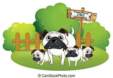 A group of bulldogs near the fence