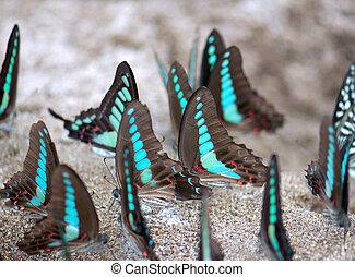 A group of butterflies - A group of beautiful butterflies...