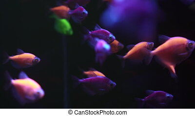 A group of colorful fish swim in the dark water.