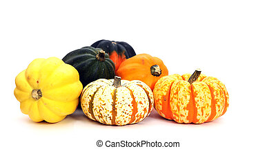 a group of colorful squash in harvest decoration