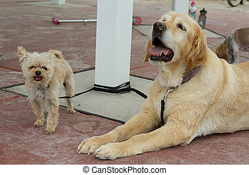 a group of dogs tied up on sidewalk