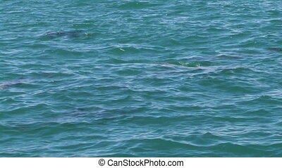 A group of dolphins on ocean