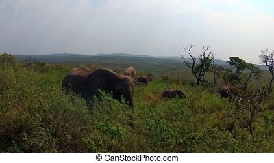 A group of elephants prowling in the wildness of the beautiful south african wilderness