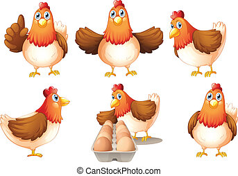 A group of fat hens - Illustration of a group of fat hens on...