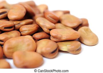 fava bean - a group of fava bean on white