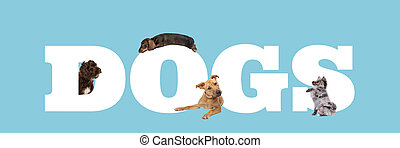 A group of four dogs around white letters