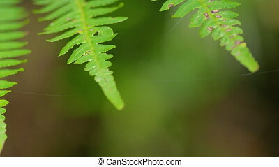 A group of green leaves - A macro shot of leaves that slowly...