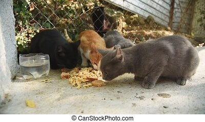 A group of homeless cats are eating food on the street. People and volunteers feed poor animals without a home