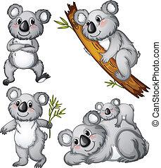 A group of koalas - Illustration of a group of koalas on a...