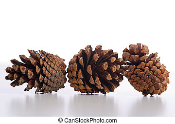A group of pine comes in white background