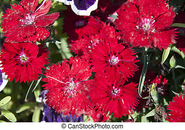 A group of red colored Flowers