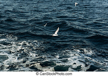 A group of seagulls