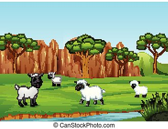A group of sheep playing in the field