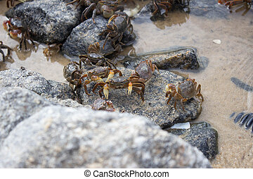 A group of small crabs on the rocks of a beach