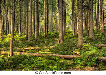 A group of trees in the forrest