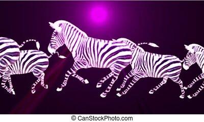 a group of zebra running & rays light.