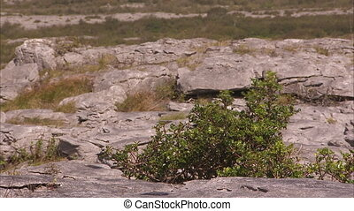 A growing plant on rocks