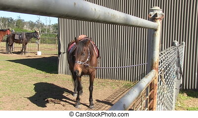A grown brown horse - A full shot of a grown brown horse on...