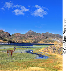 A guanaco stands on the shore of blue lake