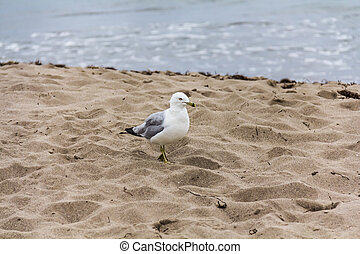 A gull on the sand