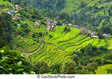 A Gurung village between rice fields in the Himalayas, Nepal...