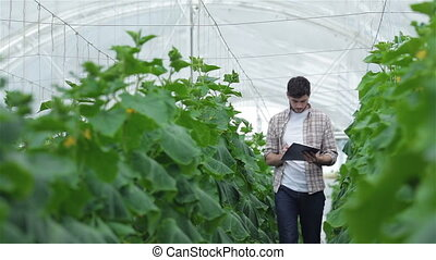 A guy with a clipboard walking slowly between the rows of green