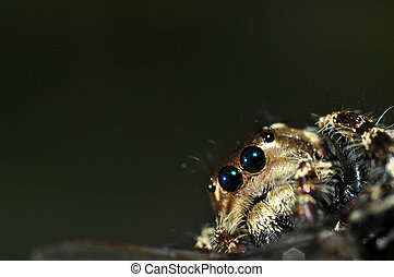 A Hairy Spider