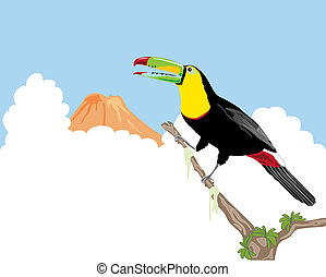 keel billed toucan - a hand drawn illustration of a keel ...