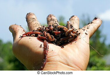 worms - A hand holding a ball of worms