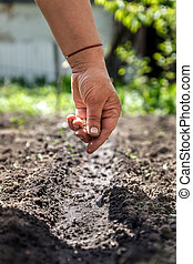 a hand sowing seeds into the soil
