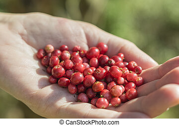 a handful of cranberries