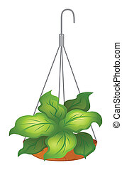 A hanging pot with green leafy plant