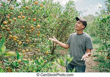 A happy farmer harvest orange fruit in the orange plantation