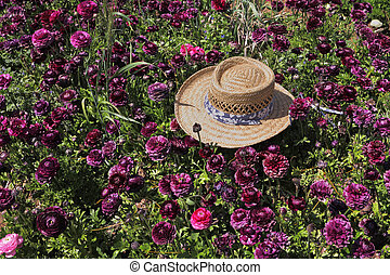A hat left on the field of flowers