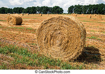 a haystack in the field after harvest